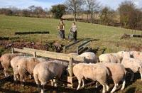 activities on Llanilid Cottages organic farm